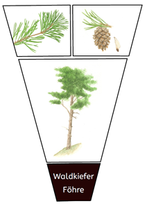 Baum Legekreis Illustrationen 1