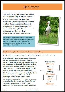 Storch 2018 1