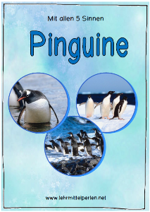 Pinguine Sinne T