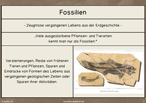 Fossilien 6