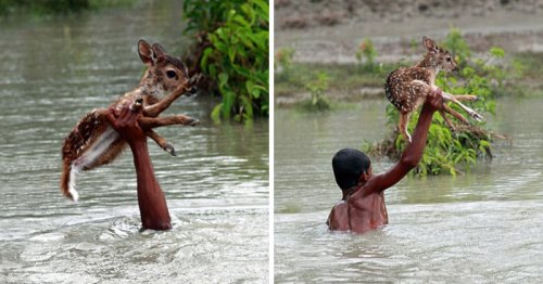 faith in humanity restored coverimage2