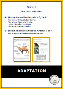 Adaptation 2